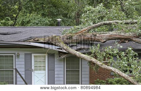 Tree Falls On The Roof Of A Small House