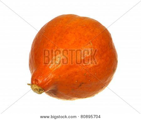 An isolated orange pumpkin