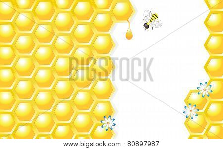 Honey Design Vector Illustration