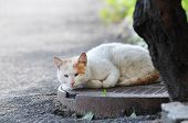 picture of manhole  - Stray cat outdoor lie on sewer manhole and looking at camera - JPG