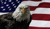 picture of bald head  - Digital oil painting of a majestic Bald Eagle against a photo of an American Flag - JPG