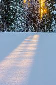 stock photo of brighten  - Sun rises behind trees and brighten snow - JPG