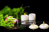 foto of fern  - spa background of plumeria flower green branch fern with drops and candles on zen basalt stones in reflection water closeup