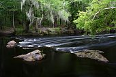 image of suwannee river  - Rapids on the Santa Fe River - JPG