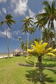 foto of beach hut  - The tranquil beaches of the South Pacific Ocean really are paradise found - JPG