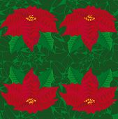picture of poinsettias  - Seamless green background - JPG