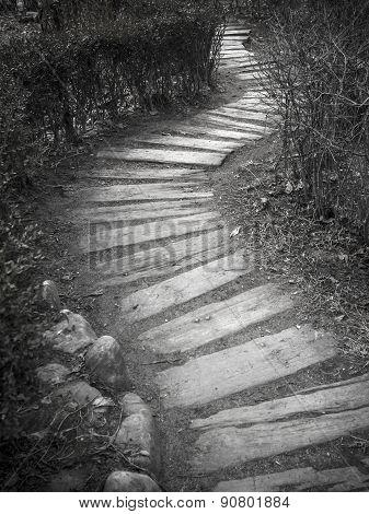 Path Through The Dry Bush