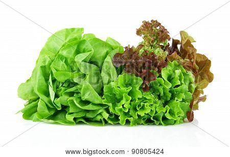 Many Varieties Of Lettuce On White