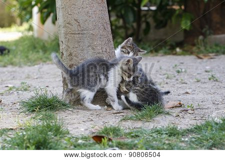 Kittens playing.