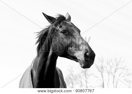 Black White Elegant Horse Head Landscape