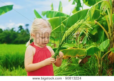 Cute Curious Baby Exploring The Rice Bundle On Green Field