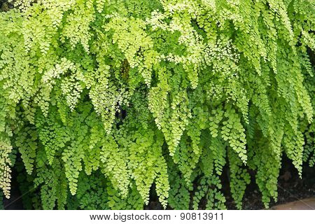 Fern full frame background