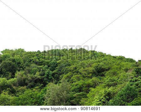 Tropical Forest Isolated Background