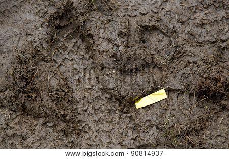 Golden Confetti In Mud