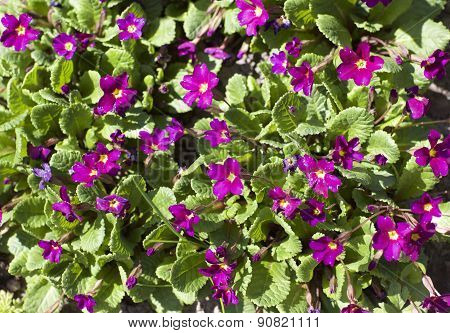 Small Crimson Flowers
