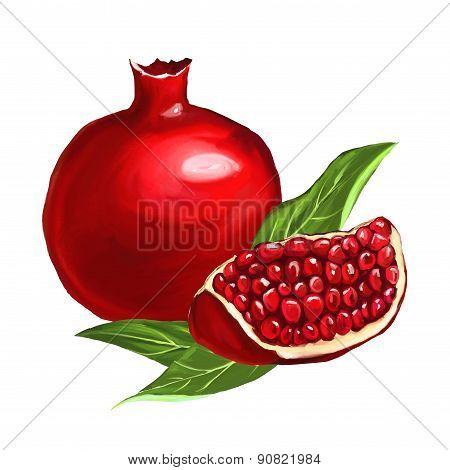 fruit pomegranate vector illustration  hand drawn  painted