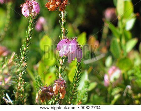 will tall flowers