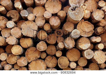 Woodpile From Big Logs For Forestry Industry