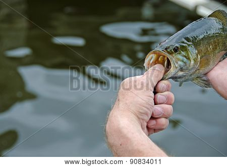 fisherman with smallmouth bass