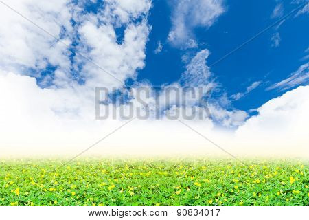 Green Clover And Yellow Blossom Under Perfect Blue Sky.  Beauty Nature Background