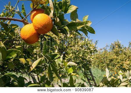 Typical Mediterranean Fruits
