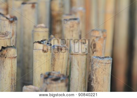 bamboo pole in soft focus