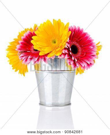 Gerber flowers in the bucket