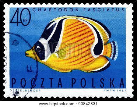 Vintage  Postage Stamp.  Barred Butterflyfish.
