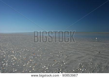 Blue sky and shell speckled beach melt at eighty mile beach