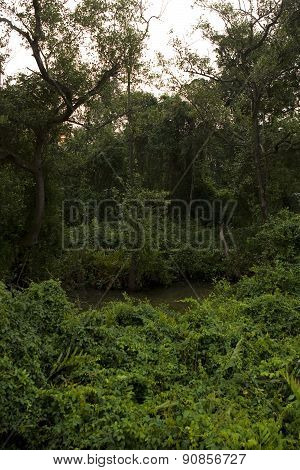 Deep Forest, Lush Tropical Rainforest In North India