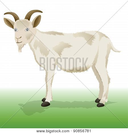 Goat - Illustration