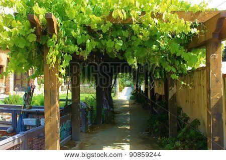 Mission Vineyard