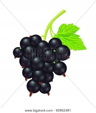 Pure Black Berry