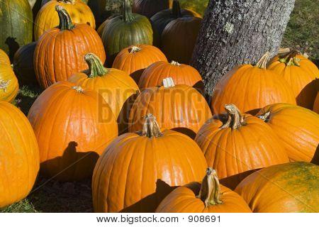Pumpkins_2217