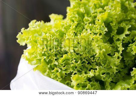 Close-up Fresh Chinese Cabbage.