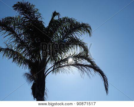 Sun sparkel between palm tree leaves