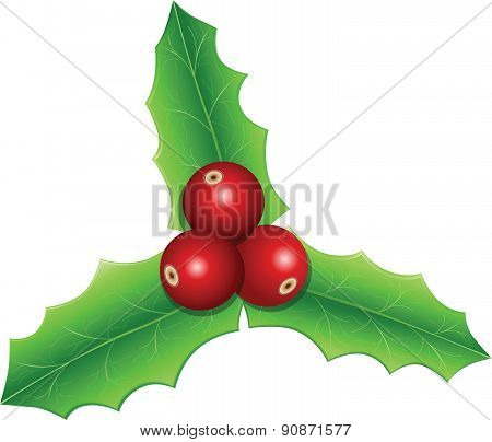Holly Leaves Christmas - Illustration