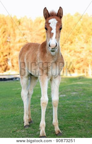 A Colt With Sprawling Legs