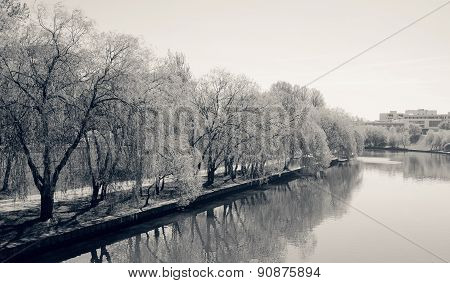 Monochrome River And Trees