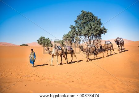Tuareg Leading A Camel Caravan Through The Desert