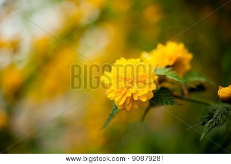flowers in the spring