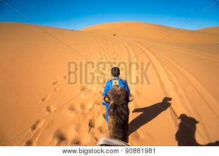 Tuareg With Camel In The Desert