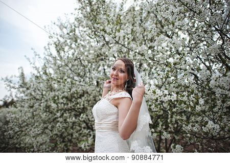 Bride At Spring Flowering And Blossom Cherries Tree