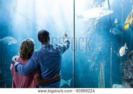 Couple looking at fish in tank at the aquarium