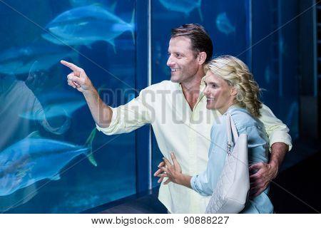 Happy couple pointing a fish tank at the aquarium