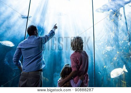 Father pointing a fish while the mother and the daughter looking at fish tank at the aquarium