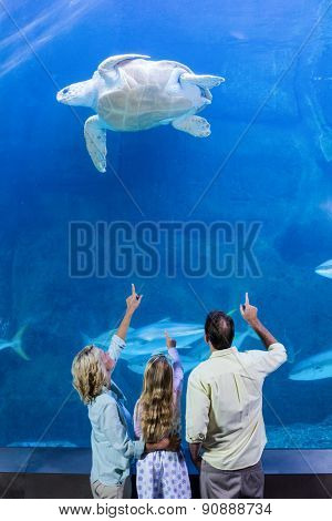 Happy family pointing at turtle in a tank at the aquarium