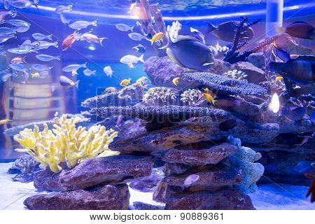 Fish swimming in a tank with corals and stones at the aquarium