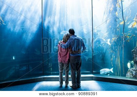 Wear view of couple looking at fish in the tank at the aquarium