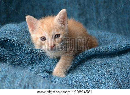 Orange kitten looking up
